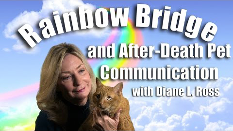 Rainbow Bridge and After Death Pet Communication